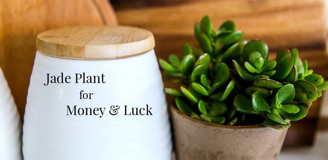 7 Best Feng Shui Accessories Tips For Wealth Vaastu And